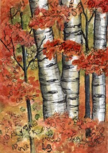autumn-birches